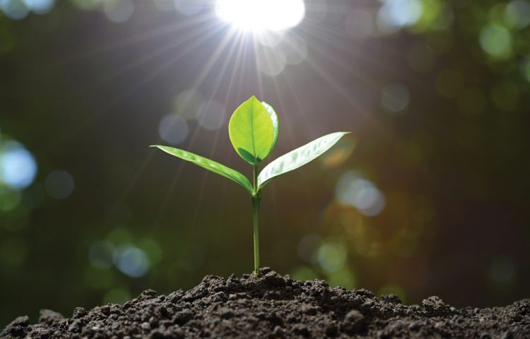 Grow in Grace (Part 1 – the Importance of Growth)